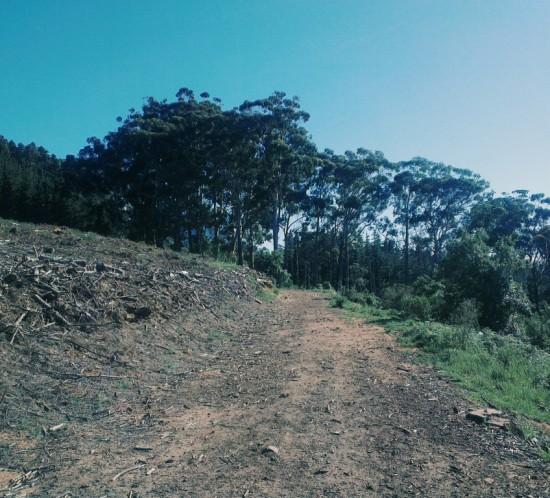 Trail Bokkies: Gone Green Belt-ing